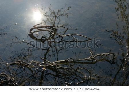 Bomen water groot boom klein silhouet Stockfoto © xuanhuongho