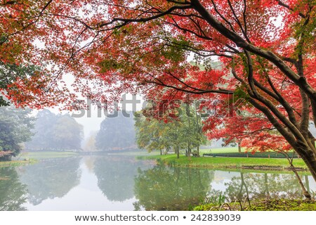 water plants in autumn foggy day stock photo © konradbak