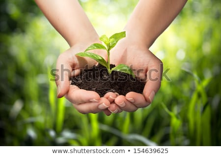 Usine mains main vie paix saleté Photo stock © oly5