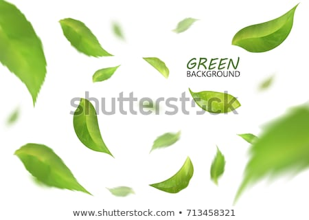 Leaf fresh illustration Stock photo © Zela