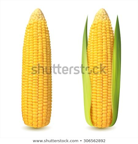 corn cob woith golden seed stock photo © stevanovicigor