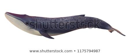 рыбы · клюв · добыча · небольшой · воды · природы - Сток-фото © ia_64
