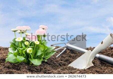 Százszorszépek ásó gereblye kék ég virág virágok Stock fotó © Zerbor
