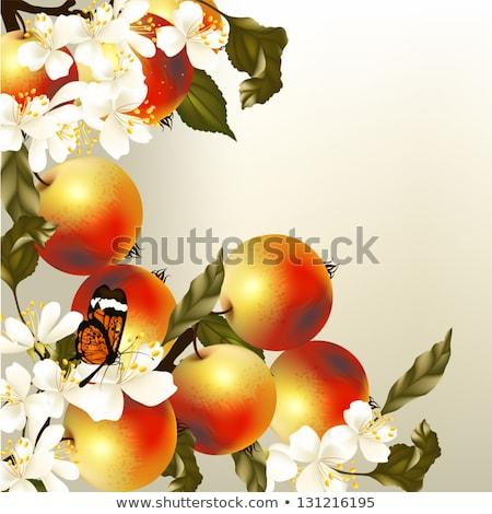 Virágzó ág gyümölcsfa közelkép virág természet Stock fotó © kasto
