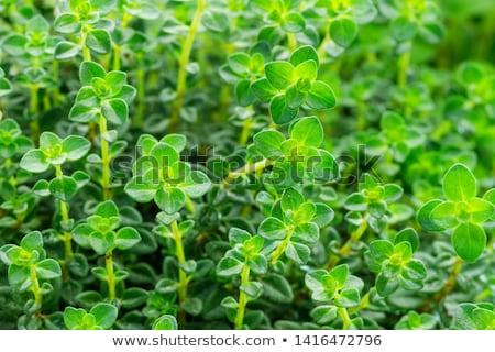 продовольствие лист здоровья фон зеленый еды Сток-фото © Hofmeester