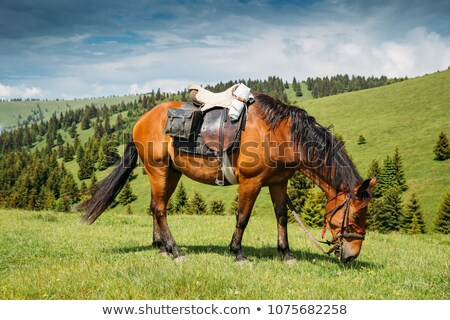 single horse in a field with blue skies stock photo © morrbyte