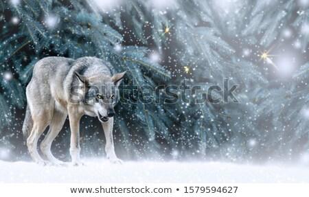 Mesés tél erdő karácsony tájkép fák Stock fotó © Kotenko