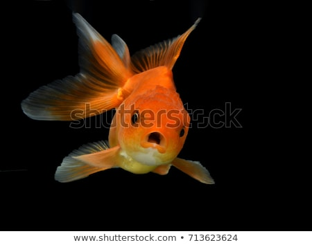 goudvis · water · plek · illustratie - stockfoto © iconify