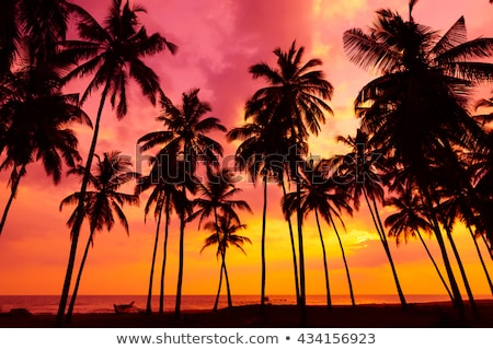 plant and trees silhouette on golden summer sunset stock photo © cienpies