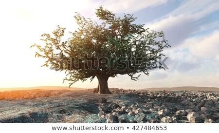 Single Dead Tree In The Desert - 3d Render Stok fotoğraf © denisgo