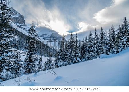 зима · реке · воды · лес · природы · снега - Сток-фото © zurijeta
