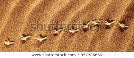 animal · dois · pata · areia · superfície · natureza - foto stock © clearviewstock