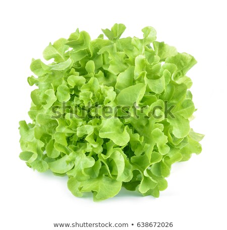 green oak leaf closeup isolated stock photo © pashabo