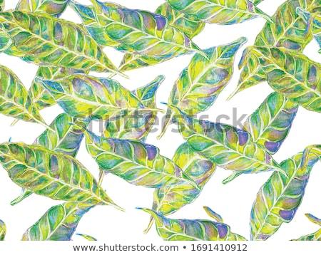 Foto stock: Verde · floral · abstrato · camomila · flores · borboletas