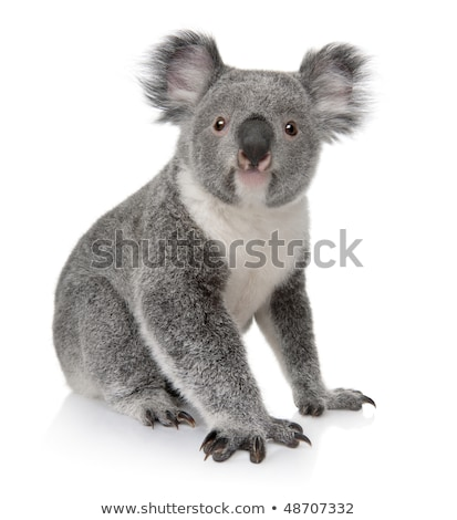 cute · koala · blanco · ilustración · feliz · arte - foto stock © bluering