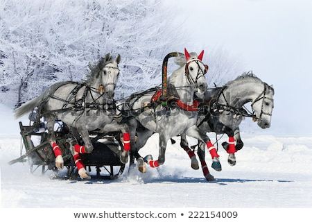 Stock photo: Three horses in harness running
