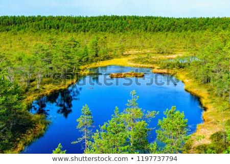 Parque Estonia árbol naturaleza lago Europa Foto stock © benkrut