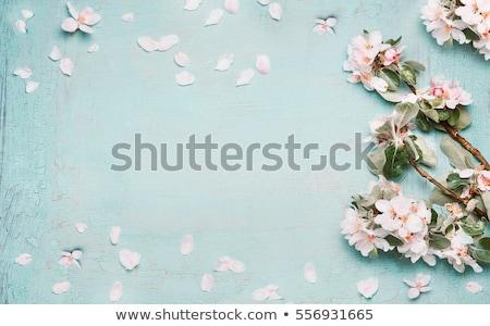 bahar · üst · görmek · vektör · boş · kağıt · levha - stok fotoğraf © kostins