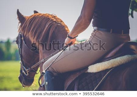 equitación · caballo · pradera · jóvenes · mujer · bonita - foto stock © is2