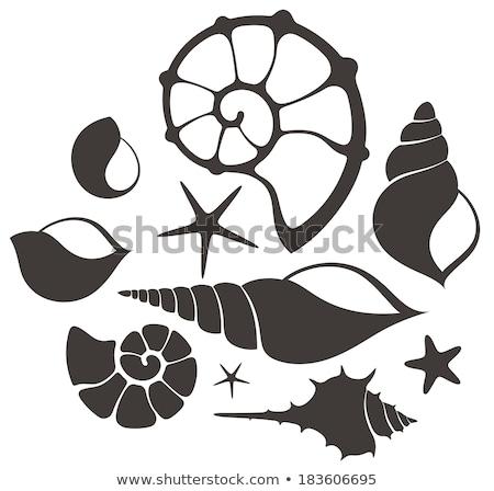 Symbol Meer Shell isoliert Illustration weiß Stock foto © robuart