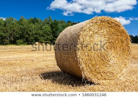 Fardo palha campo de trigo colheita grande Foto stock © simazoran