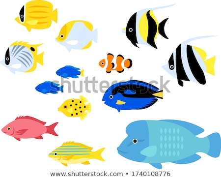 Boxfish and Butterfly Fish Isolated on White Icons Stock photo © robuart
