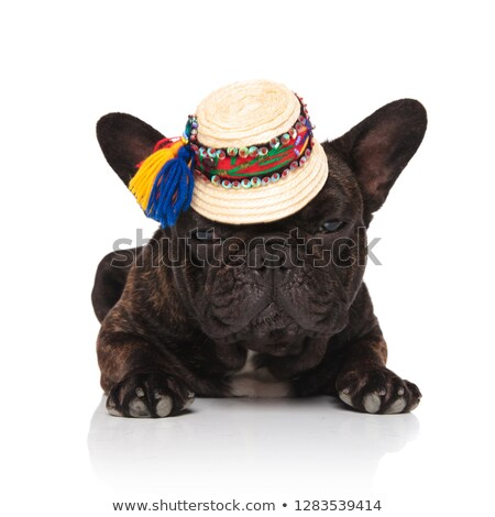 adorable french bulldog wearing traditional straw cap resting Stock photo © feedough