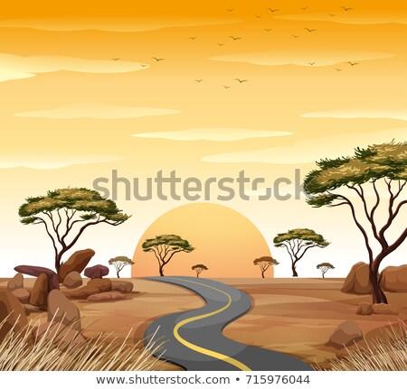 Savana cena vazio estrada pôr do sol ilustração Foto stock © colematt