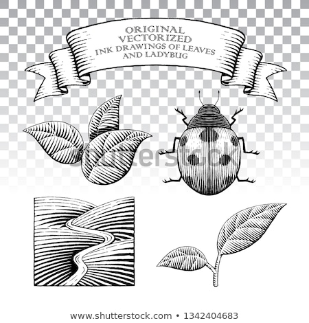 Scratchboard Style Ink Drawings of Leaves and Ladybug Stock photo © cidepix