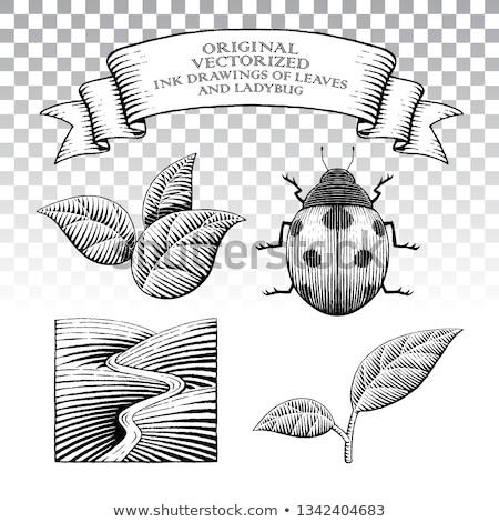 coccinelle · feuille · logo · icône · vecteur · élément - photo stock © cidepix