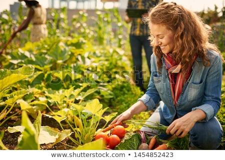 Jardinero mujer creciente hortalizas invernadero diligente Foto stock © Kzenon