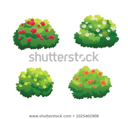 Green Plant, Tree with Flowers, Bushes Vector Stock photo © robuart