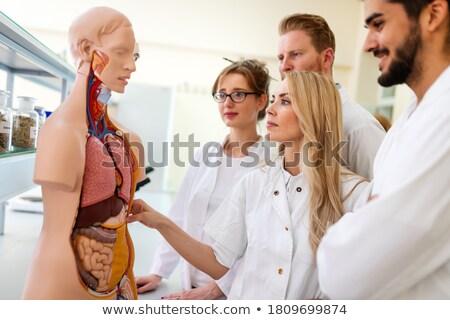öğretmen · model · kalp · biyoloji · sınıf · okul - stok fotoğraf © highwaystarz