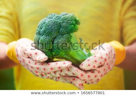 Anônimo pessoa grande fresco brócolis mãos Foto stock © dashapetrenko