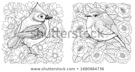 Coloring book daisy flower image 2 Stock photo © clairev