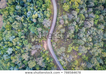 Ziguezague estrada luz topo montanha de manhã cedo Foto stock © Ansonstock