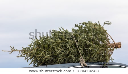 Tree in a Car stock photo © tepic