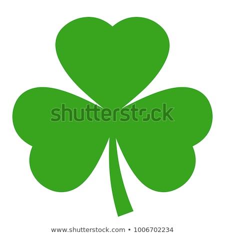 Shamrock клевера кнопки весны зеленый ирландский Сток-фото © wingedcats