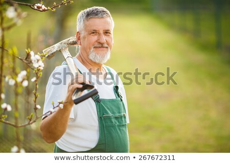 portrait of a senior man gardening in his garden (color toned im Stock photo © lightpoet