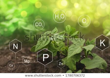 ásvány műtrágya Stock fotó © LianeM