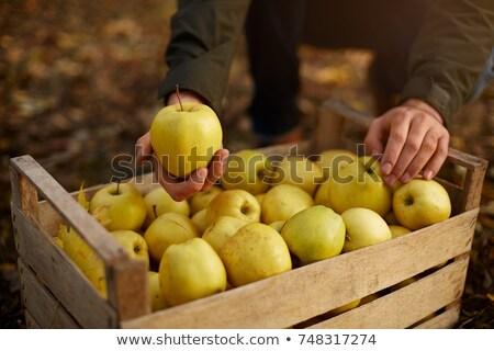 el · sarı · elma · eller · gıda - stok fotoğraf © ambro