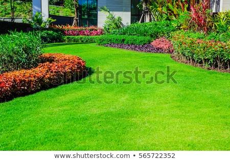 зеленый газона можете используемый лист лет Сток-фото © sailorr