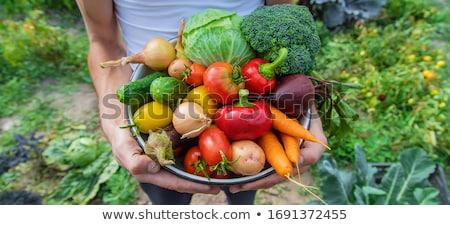 Sazonal frutas cesta mesa de madeira maçã Foto stock © funix