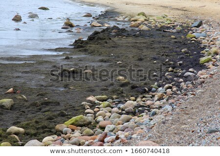 Baltic Sea coast is covered with rotting seaweeds Stock photo © marekusz