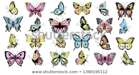 gyűjtemény · színes · pillangók · illusztráció · izolált · fehér - stock fotó © AlonPerf