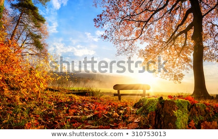 scenic autumn countryside stock photo © tracer