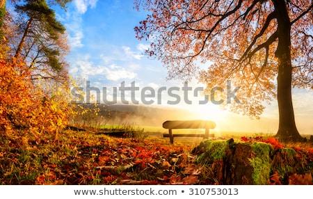 живописный осень стилизованный деревне Сток-фото © tracer