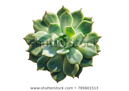 A topview of a green landscaping plant Stock photo © bluering