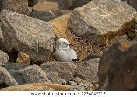 Rock eieren ei achtergrond aarde berg Stockfoto © zurijeta