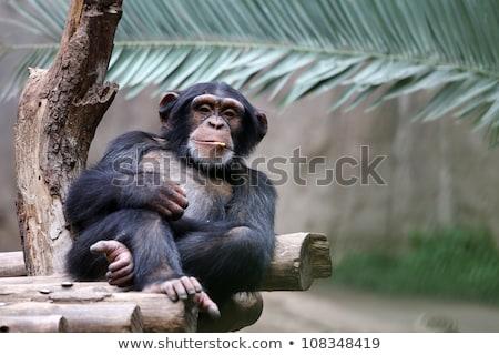 bonitinho · pequeno · macaco · sorrir · arte · animais - foto stock © robuart